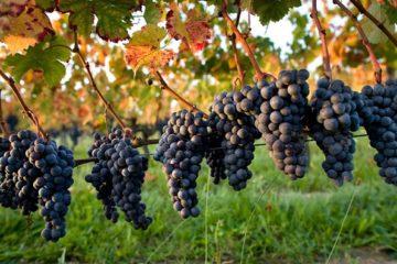 vin-traiteur